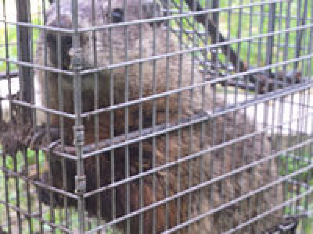 Groundhog Removal and Control in Roscoe and Rockford, IL